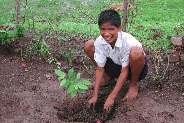 6000 Tree Plantations In Kalahandi Amma Janla Odisha